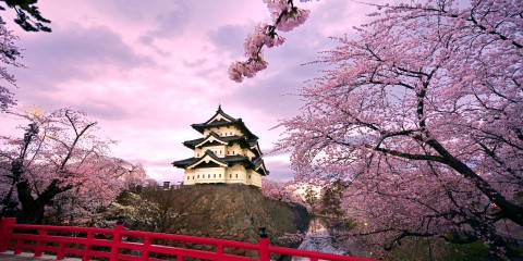 cherry-blossoms-with-japan-castle-wallpaper-530f2421b6dc2